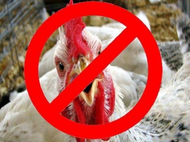 птичьего гриппа картинки для всех уголках нашей