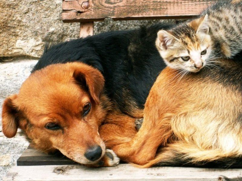 НаДону бездомных животных будут отлавливать, вакцинировать истерилизовать