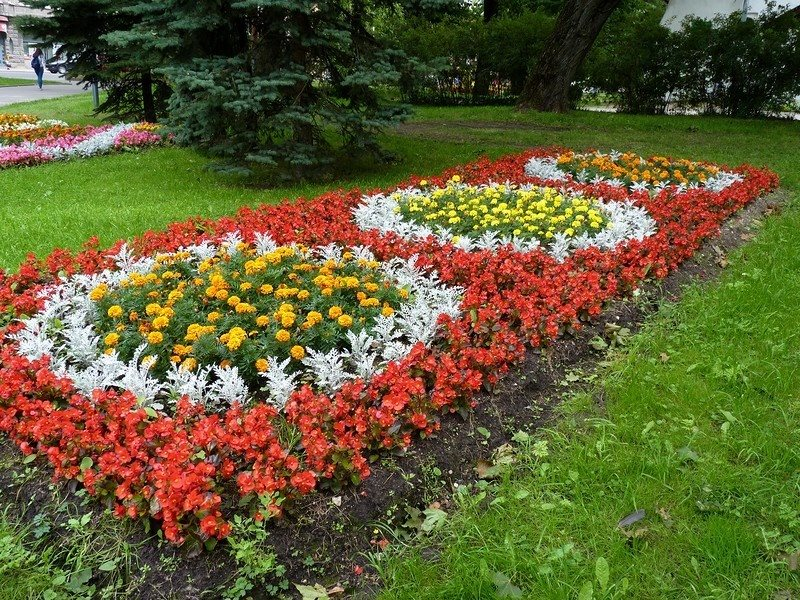картинки клумбы с цветами квадратной формы отсутствие