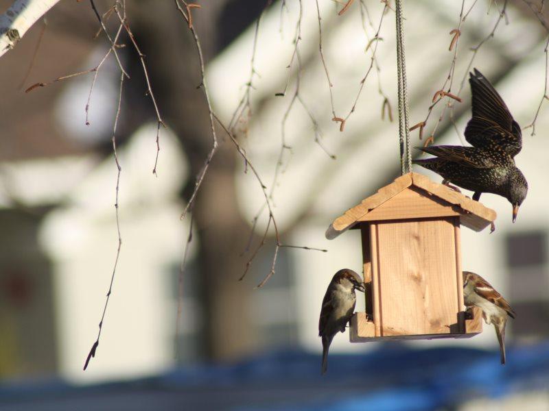 Картинки кормушка для птиц для детей весной