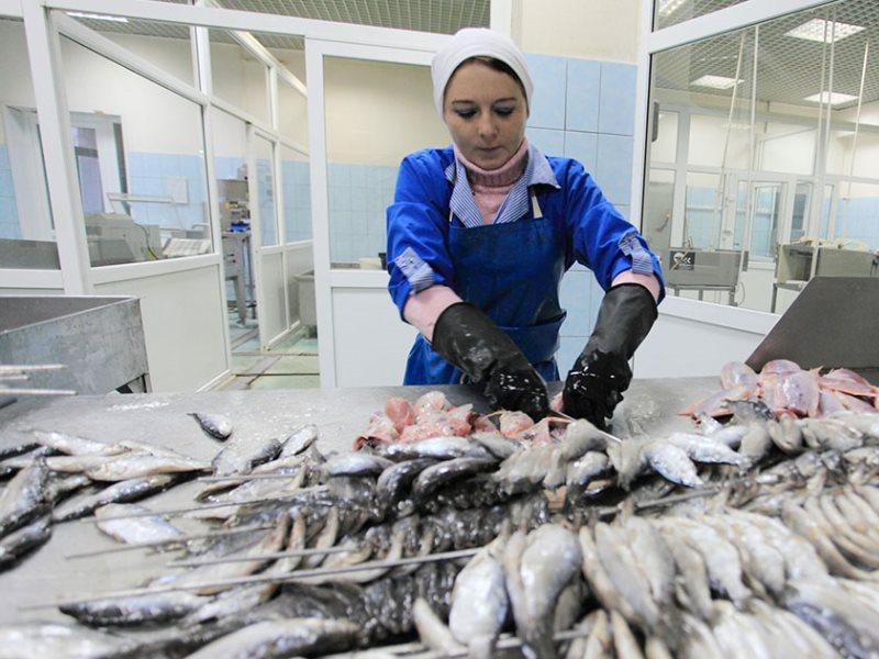 Фото рыба тюмень цех