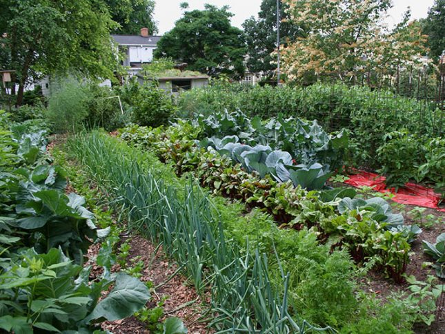 Сажаем растения в огороде 933